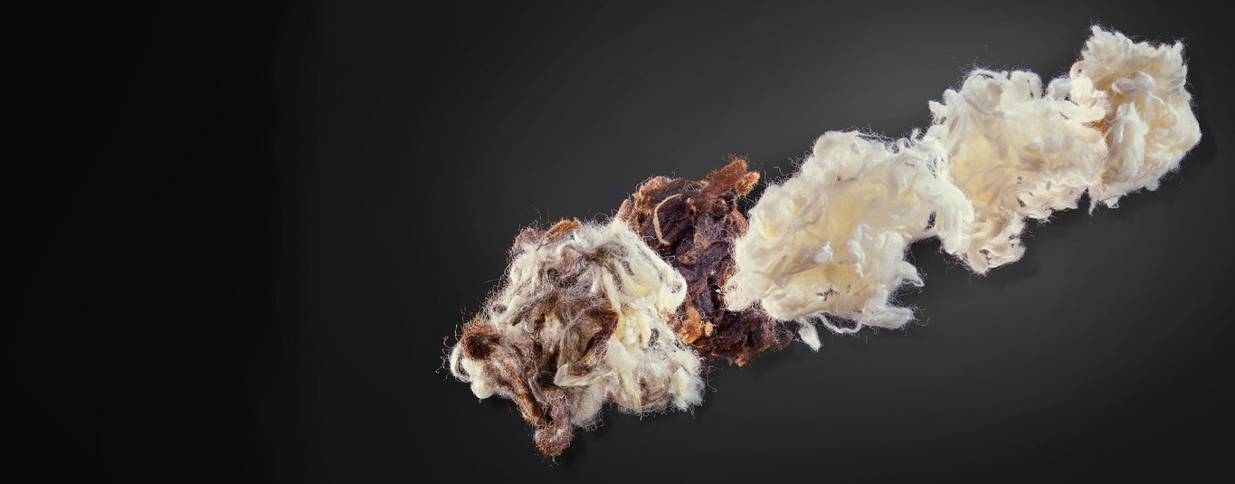 wool fibre raw materials